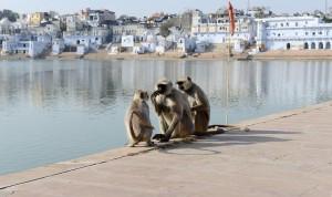 Dammen i Pushkar