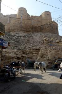 Kossor även här och i bakgrunden Jaisalmer Fort