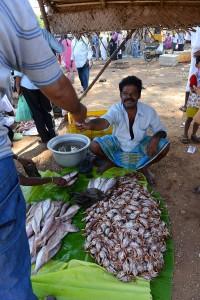 Krabbor och fisk 7