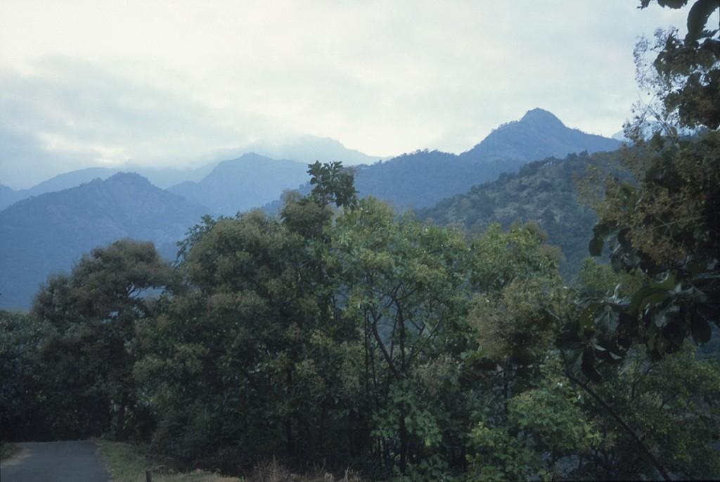 Palni Hills