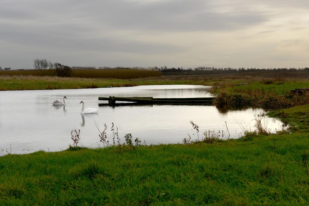 Damm vid Billeberga